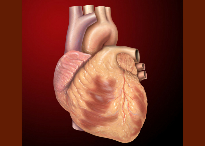 heart growth for baby