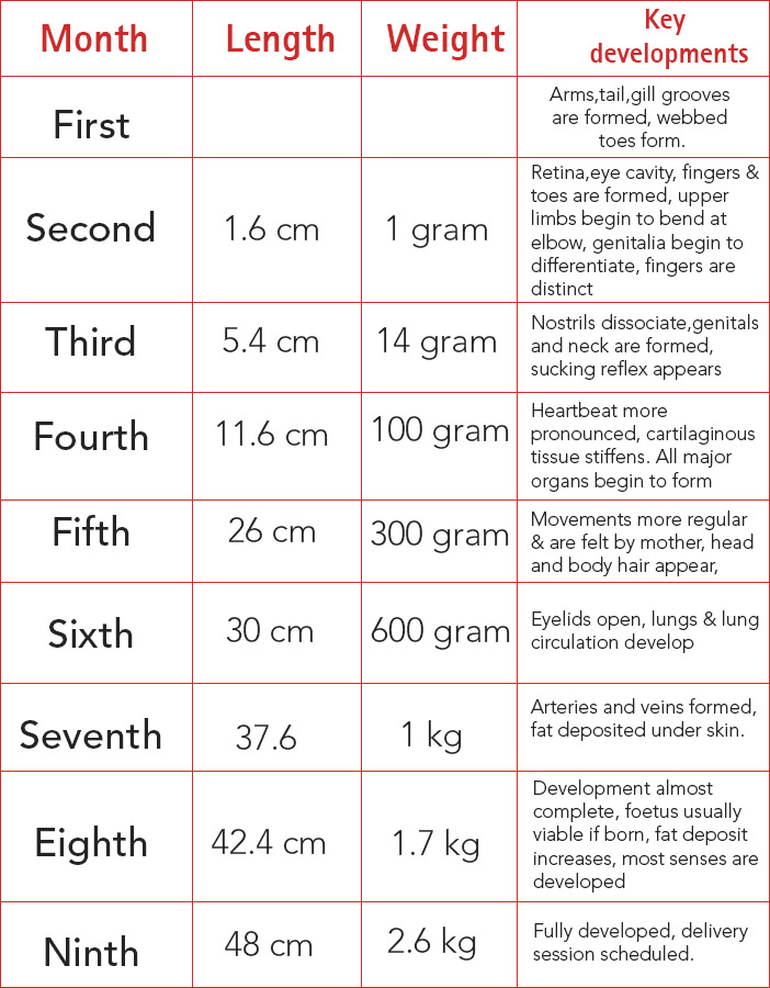 Pregnancy Stages, Pregnancy Calendar & Fetal Development ...