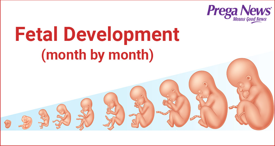 Stage wise development of fetus (0-9 months)