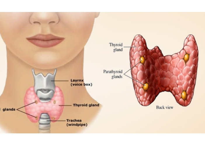 how to cure thyroid problems