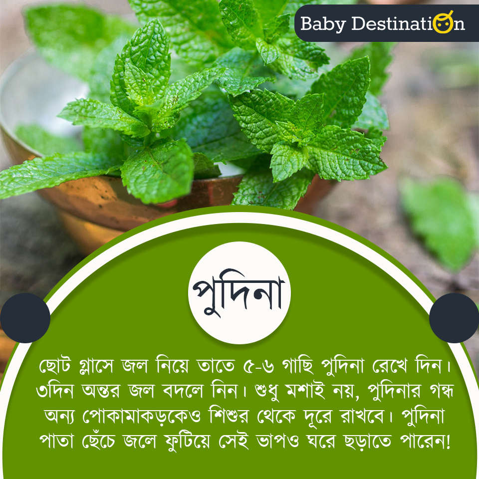 How to protect babies from mosquito in Bengali