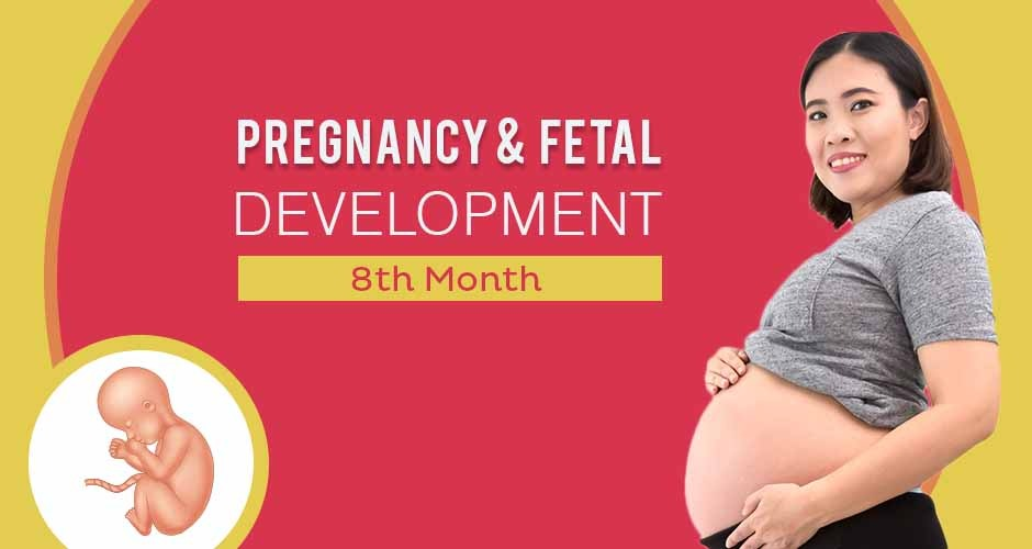 Eighth Month Of Pregnancy : Care, Diet, Symptoms & Fetal Development