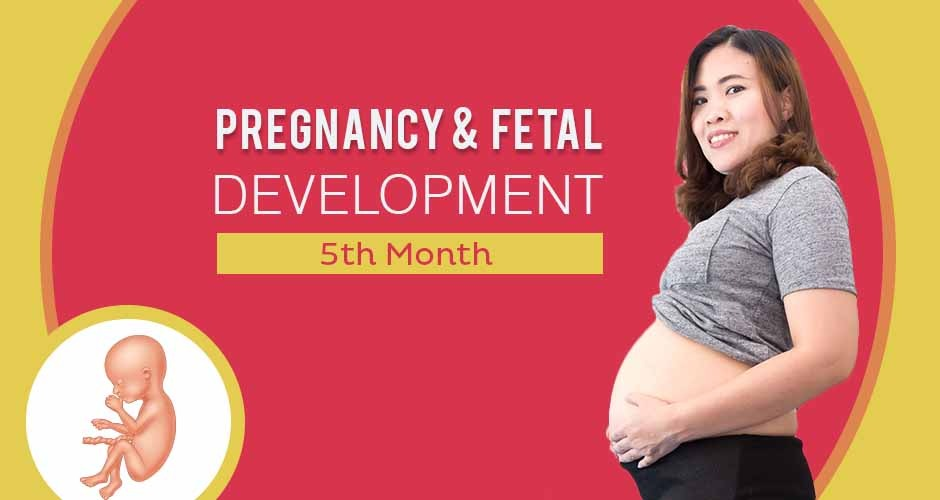 Fifth Month Pregnancy : Care, Diet, Symptoms & Fetus Development