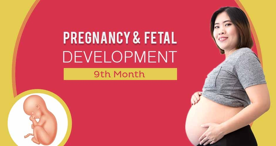 Ninth Month Of Pregnancy : Care, Diet, Symptoms & Fetal Development