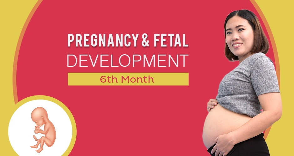 Sixth Month Pregnancy : Care, Diet, Symptoms & Fetal Development