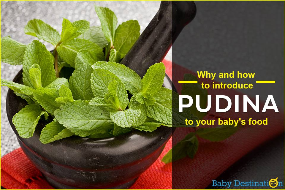 When And How To Introduce Pudina To Your Baby's Food