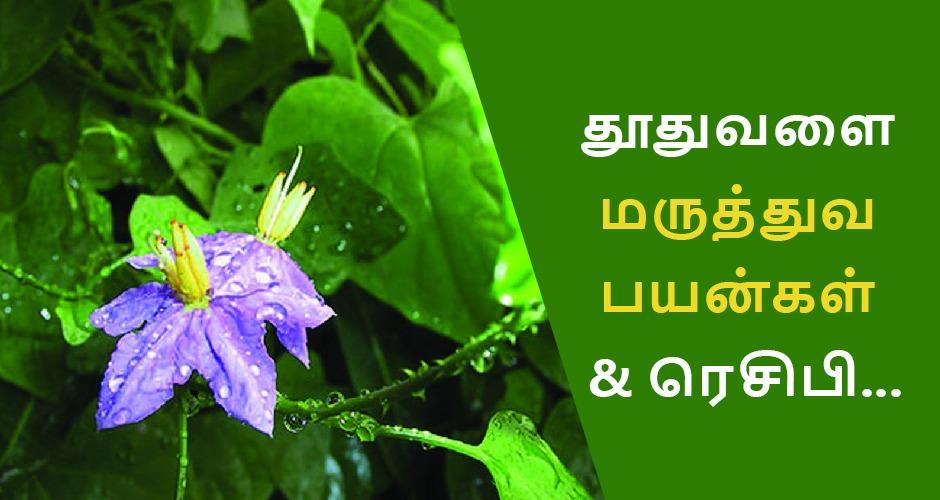 தூதுவளை மருத்துவ பயன்கள் & Thoothuvalai ரசம், துவையல்!